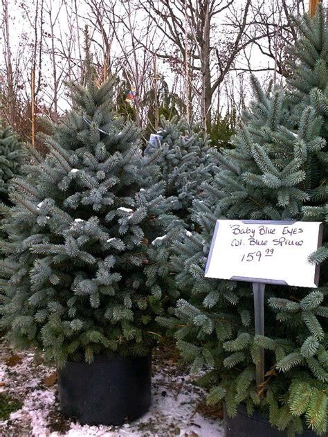 live christmas trees near me best 25 tree farms ideas on tree tree farms near me and