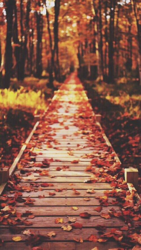 Wallpaper Iphone Fall Background by Best 25 Fall Wallpaper Ideas On Fall