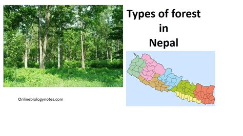 Types of Forest in Nepal Online Biology Notes
