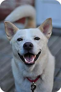 Rocky | Adopted Dog | Guelph, ON | Husky/Australian Cattle ...
