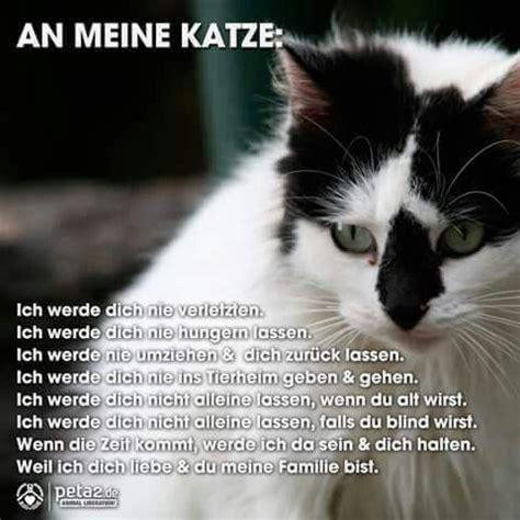 28 besten zitate 252 ber katzen bilder auf
