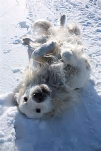 Snow Angel Golden Retriever