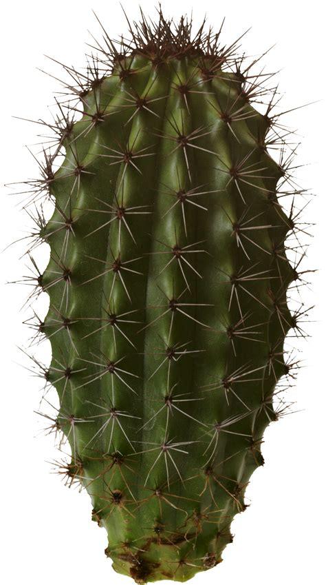 Cactus Transparent PNG File