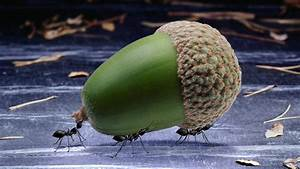 Wie Bekämpfe Ich Ameisen : ameisen wie ameisen den k rzesten weg finden ameisen ~ Whattoseeinmadrid.com Haus und Dekorationen