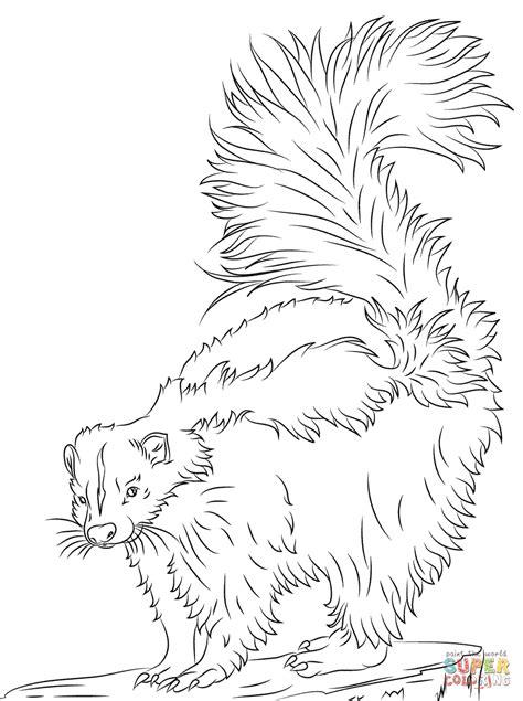 Kleurplaat Stinkdier realistic skunk coloring pages coloring home