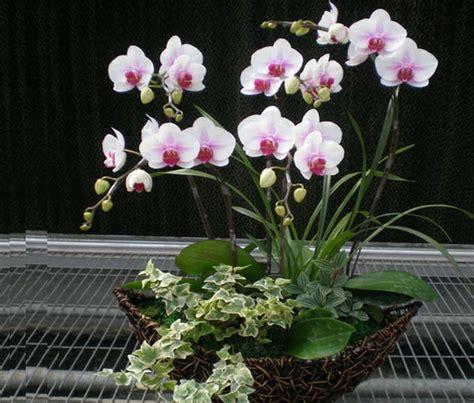 mudahnya merawat bunga anggrek tanaman hias