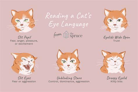 eyes cat cats talk reading