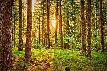 Woods Pexels Trees