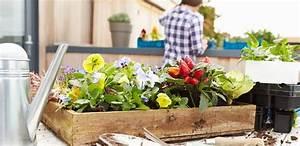 Balkonblumen Richtig Pflanzen : balkonblumen tipps zur pflanzung und pflege ~ Frokenaadalensverden.com Haus und Dekorationen