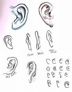 Cartoon Ear Drawing At Getdrawings