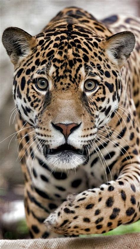 Best Images About Animal Kingdom Pinterest