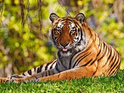Animals Wallpapers Animal Backgrounds Ever Wild Screensavers