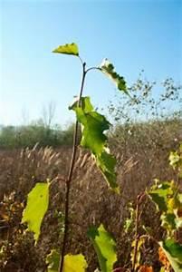 Branche De Bouleau : petite branche de bouleau t l charger des photos ~ Melissatoandfro.com Idées de Décoration