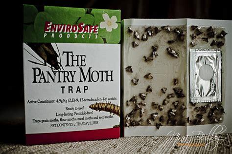 food    rid  pantry moths