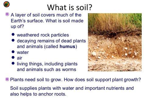 what is mulch made of top 28 what is mulch made of what is soil made of bioed online choosing between pine
