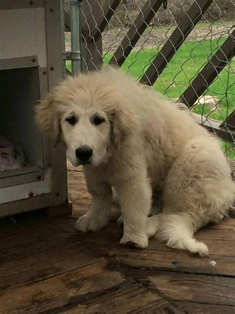 Casper The Dog Rescued From Puppy Mill