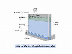 Diagram Of A Disc Electrophoresis Apparatus