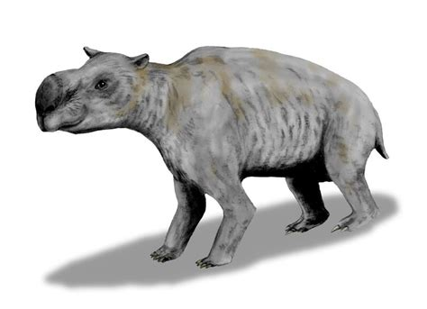 large size of coloring images drawing images coloring file diprotodon bw jpg wikimedia commons