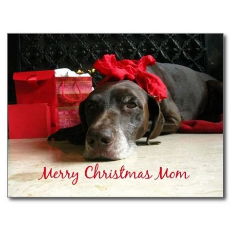 dog wished moms a merry christmas pictures photos and images for facebook pinterest
