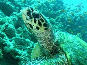 Maui Turtle Map: Best Places to See the Sea Turtles   Best ...