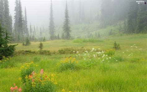 flowers trees summer viewes meadow grass fog
