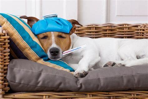 benadryl  dogs       happy pooch