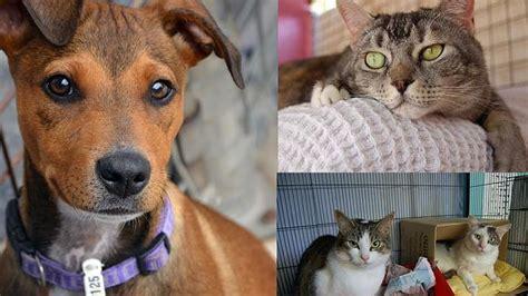 adopt    friend   animal welfare league