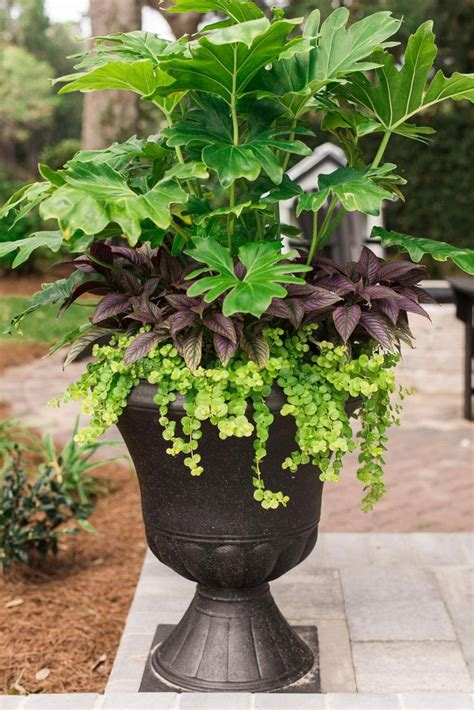 outdoor potted plants sun vegetables garden ideas archives garden trends