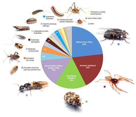 Dozens Of Insects And Spiders May Live In Every Room Of. Kitchen Cabinet Maker Brisbane. Do Ikea Kitchen Cabinets Come Assembled. Membrane Press Kitchen Cabinet. Kitchen Cabinets Home Hardware. Cheap Kitchen Cabinets Toronto. Cabinet Kitchen Design. 1950s Kitchen Cabinet. Benjamin Moore Gray Kitchen Cabinets