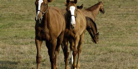 horse young development weanlings six months years field bone growth exercise regulate scientists benefit helps believe shown turn research th