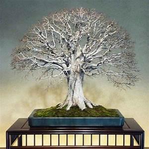 Bonsai Baum Garten : 520 besten bonsai bilder auf pinterest bonsai pflanzen ~ Lizthompson.info Haus und Dekorationen