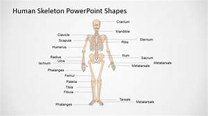 Body Outline Powerpoint Templates
