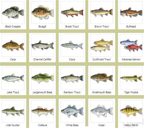 fishes   fishes names  pictures  fish