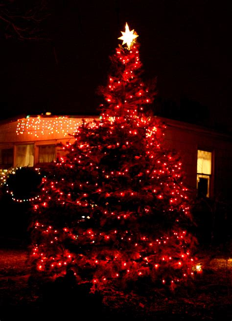 tree with lights picture free photograph photos domain - Red Lights Christmas Tree