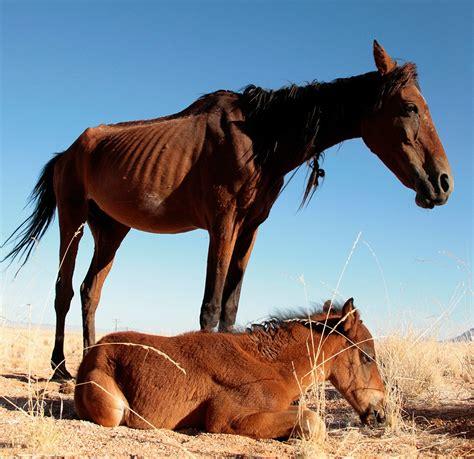 horses horse wild namibia desert namib foal africa magazine called spirit sometimes