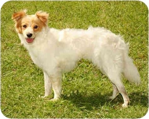 goldilocks adopted dog  marina del rey ca