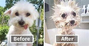 10+ Funny Dog Pics Before And After A Bath   Bored Panda