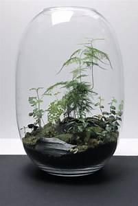 Bonsai Im Glas : gr na v xter elle ~ Eleganceandgraceweddings.com Haus und Dekorationen