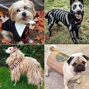 diy costumes for dogs popsugar pets