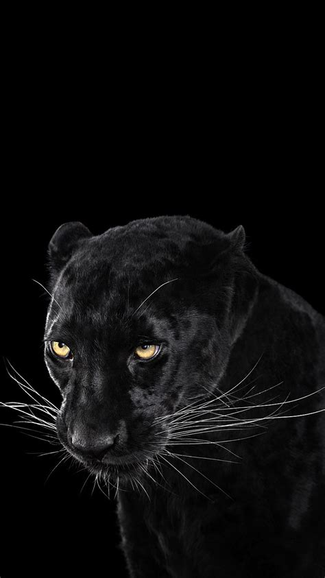 black panther wallpaper iphone wallpaper iphone wallpapers