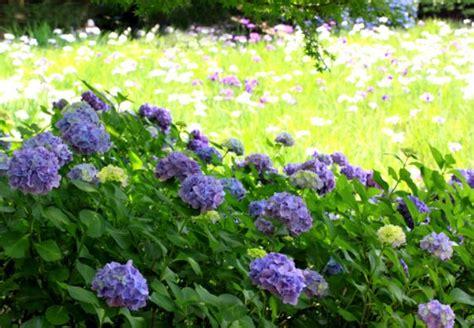 Pflanzen Im Garten by Giftige Pflanzen Im Garten Obi Ratgeber