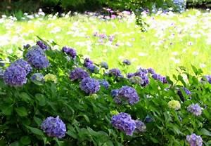 Welche Erde Für Hortensien : giftige pflanzen im garten obi ratgeber ~ Eleganceandgraceweddings.com Haus und Dekorationen