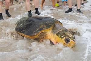 Biggest Turtle Ever Rescued | SeaWorld Orlando's Rescue ...