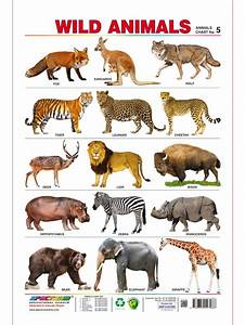 Spectrum Pre-School Kids Learning Poster Educational Wild ...
