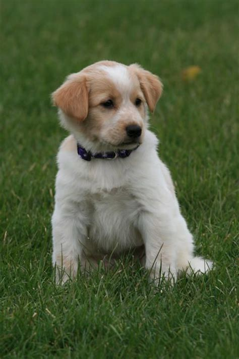 images  mixed breed dogs  pinterest