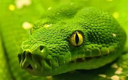 Anaconda Wallpapers Snake Cool Anakonda Background Backgrounds