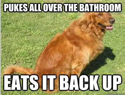 Golden Retriever Meme - golden retriever memes image memes at relatably com