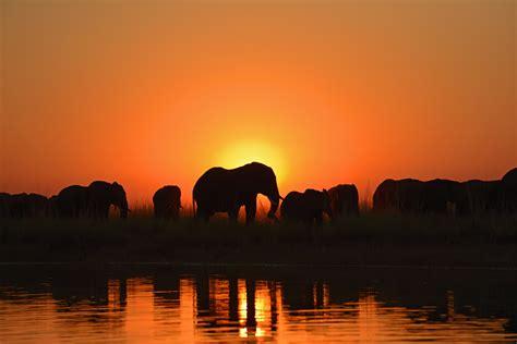 elefantenherde bei sonnenuntergang forum fuer naturfotografen