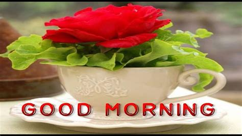Latest Good Morning Wishes, Sms, Greetings, Whatsapp Video Coffee Pods Javarama That Fit Aldi Machine Make Your Own Creamers With No Carbs Natural For Keto Diet New Zealand Lucerne