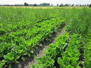 Ensayos GEP de diferentes cultivos en Valladolid